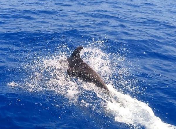 Avvistamento cetacei 1