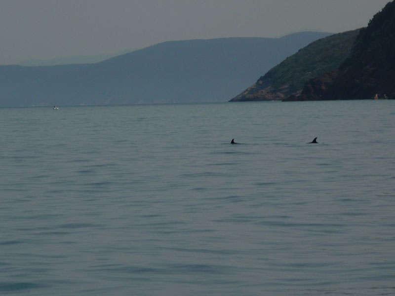 Avvistamento cetacei 2